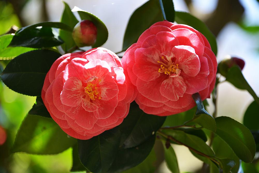 Japan 5 Apr 2014 KAMAKURA 17