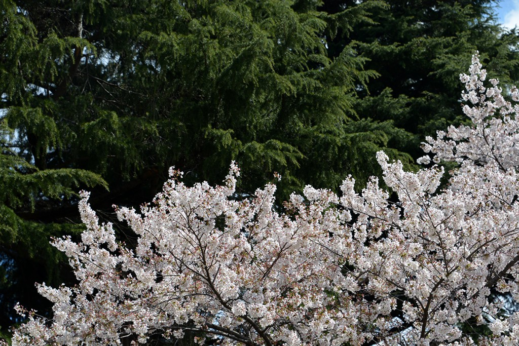Japan 6 April 2014 Tokyo Park Shinjuku Guyon_12