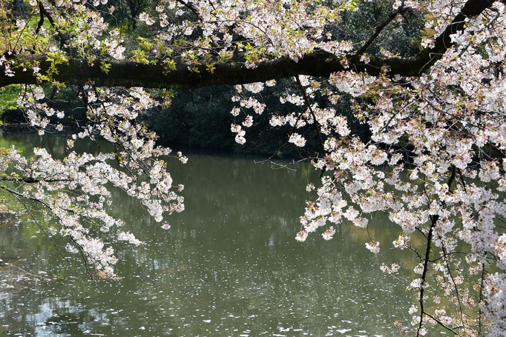 Japan 6 April 2014 Tokyo Park Shinjuku Guyon_57