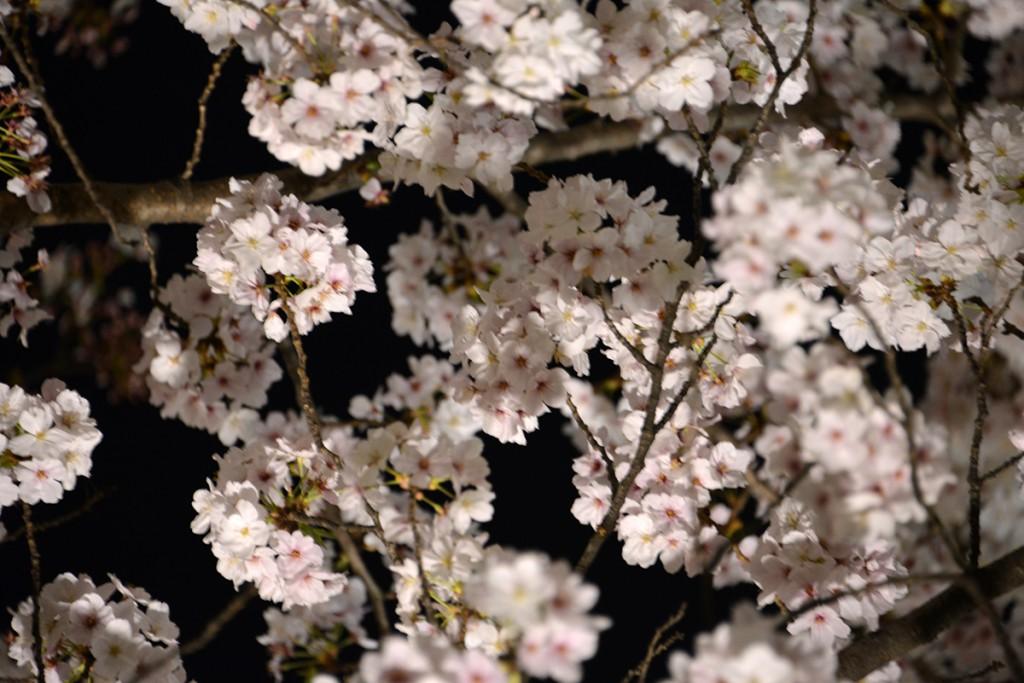 Japan 8 April 2014 Kyoto 113