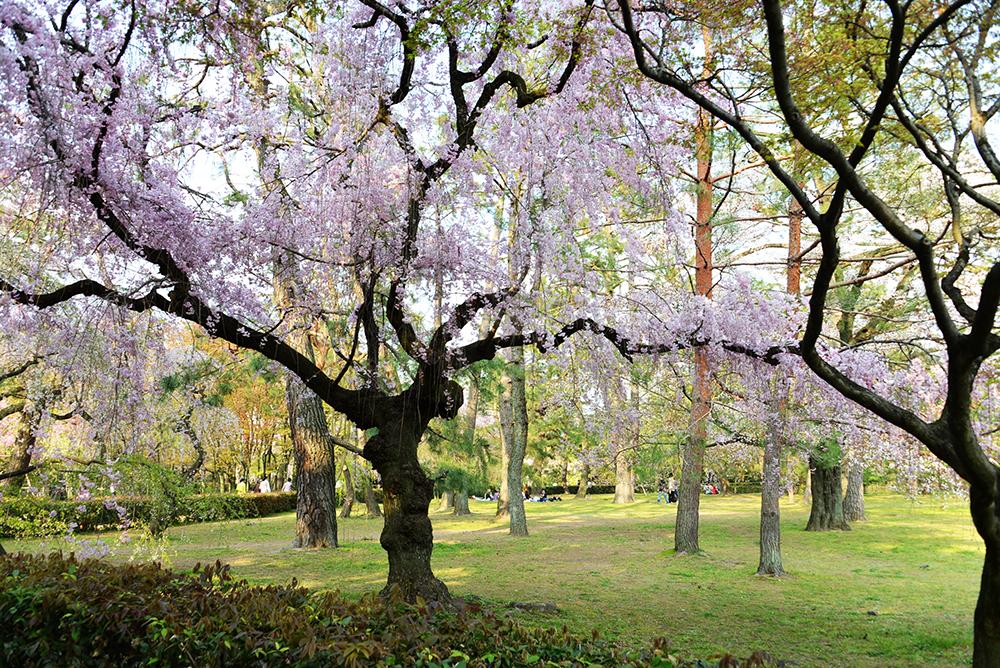Japan 8 April 2014 Kyoto 42