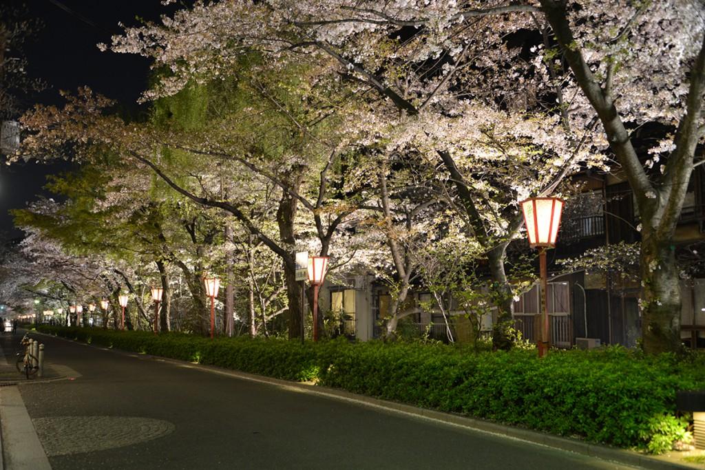 Japan 9 April 2014 Kyoto 64