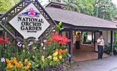 Орхидеи в Сингапуре