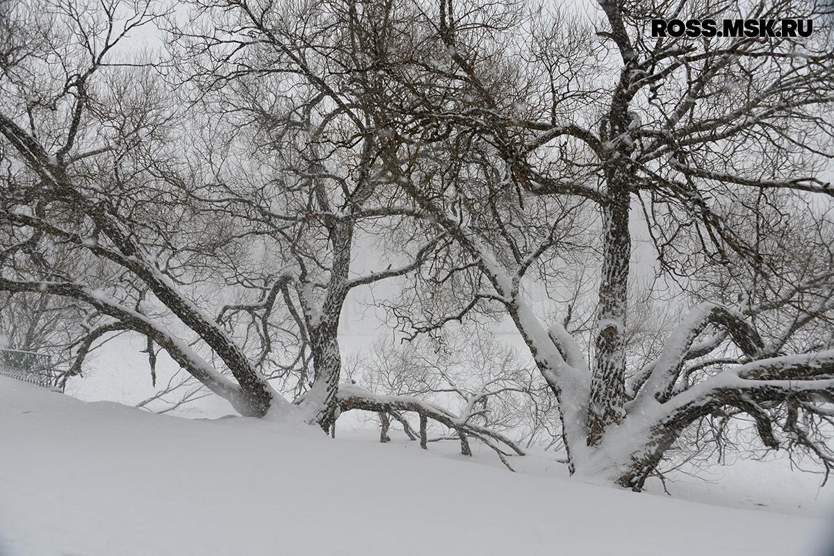_01_2016 Schnee in Kaliningrad 10