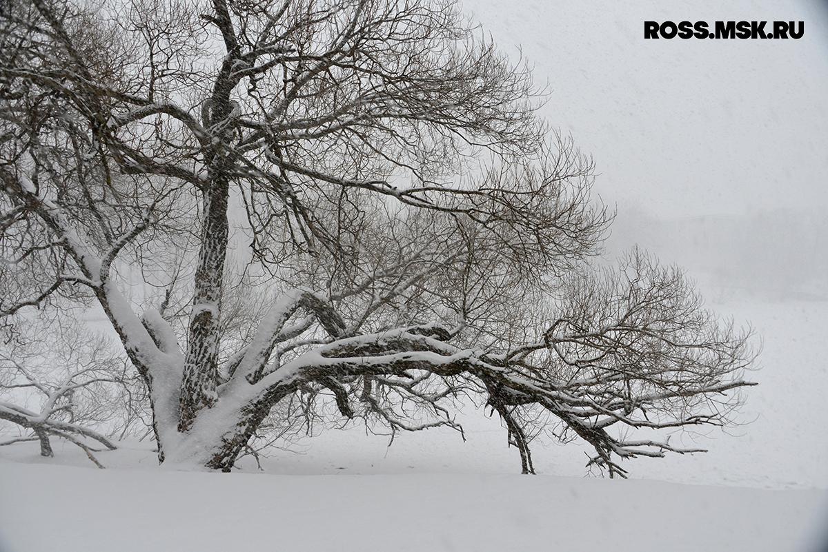 _01_2016 Schnee in Kaliningrad 9