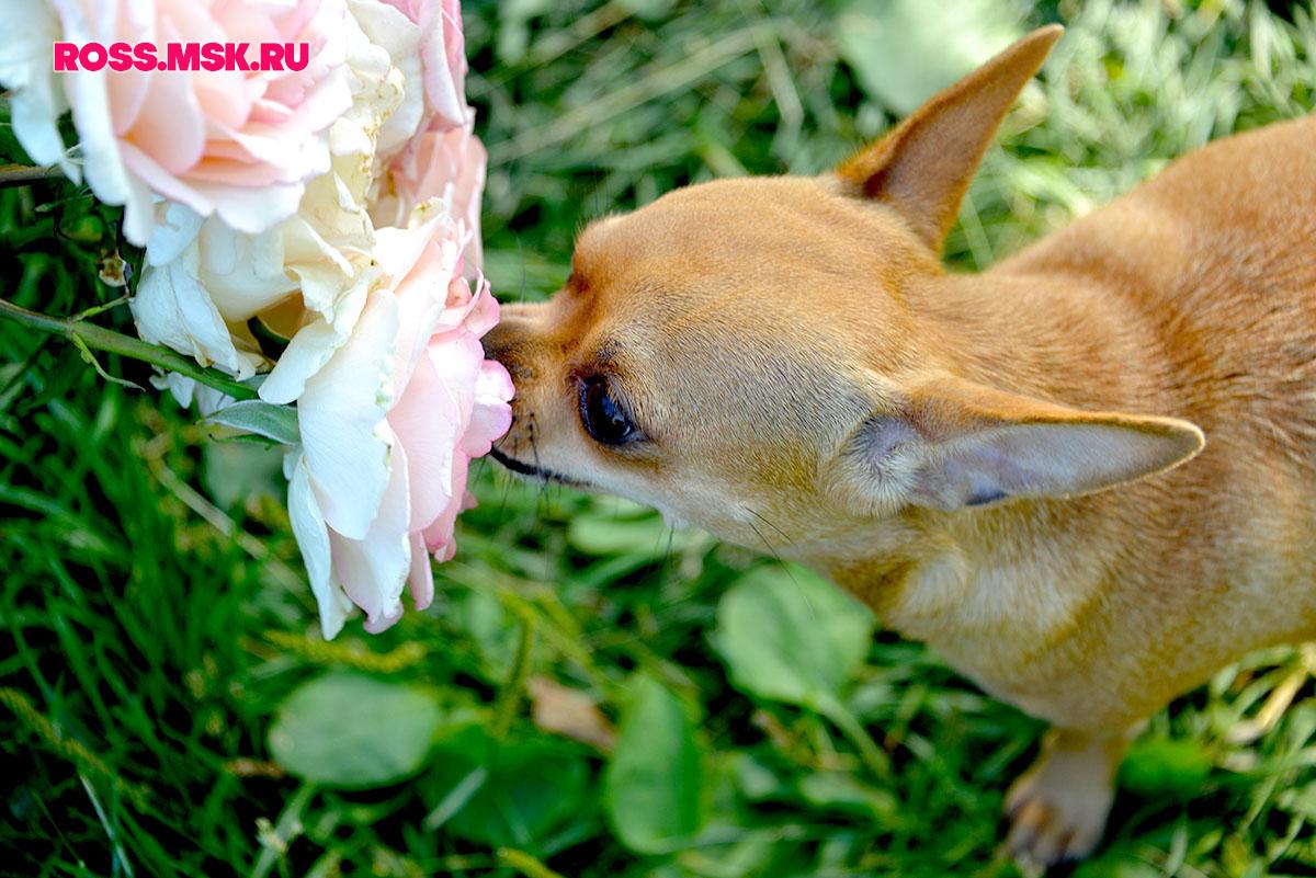 _LULU 06_2016 I Gorky Park Roses 8