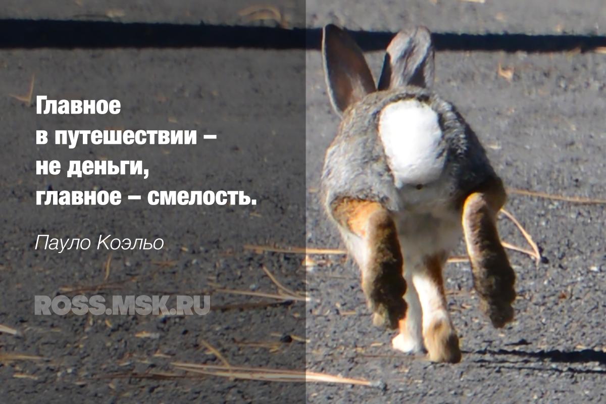 _Inspired Coelho ROSS.MSK.RU
