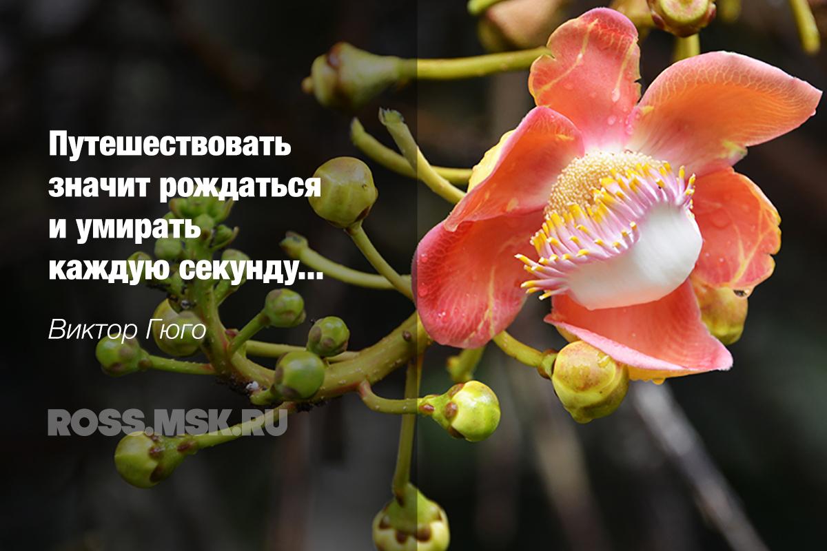 _Inspired Hugo ROSS.MSK.RU