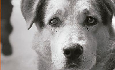 Путешествие собаки