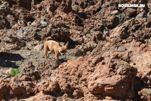 Дмитрий Росс. Путешествие с собакой в Испанию. Тенерифе, Канарские острова