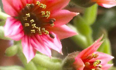 Комнатные растения. Сувениры из путешествий