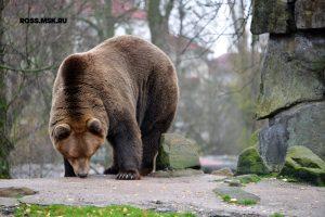 Путешествие в Калининград. Калининградский зоопарк